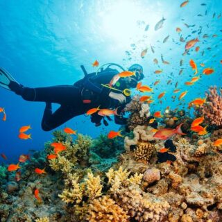 Careers with Degree in Marine Biology